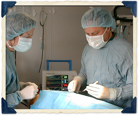 Pet Surgery Spays and Neuters